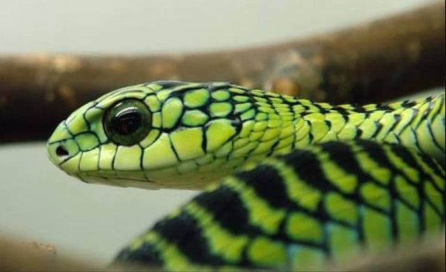 Image of exotic snake