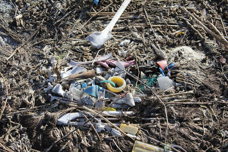 Albatross carcass and marine debris