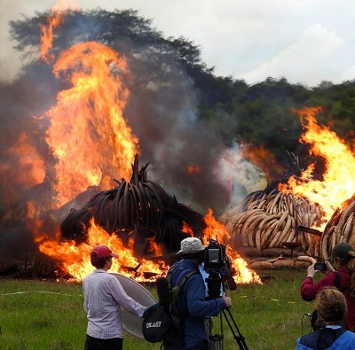 Elephant tusks on fire