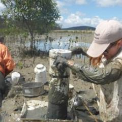 Sampling invertebrates within deep mudflats in Gladstone, Australia. (Credit: Chi-Yeung Choi)